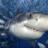 bruce_shark%40pluspora.com